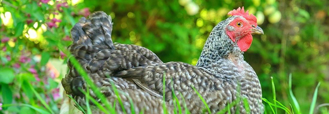Exposición de aves