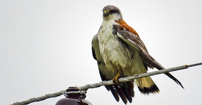 Encuentro de fotografía y avistaje de aves