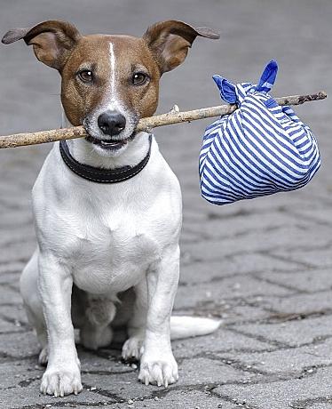 Cursos ilegales de veterinarios