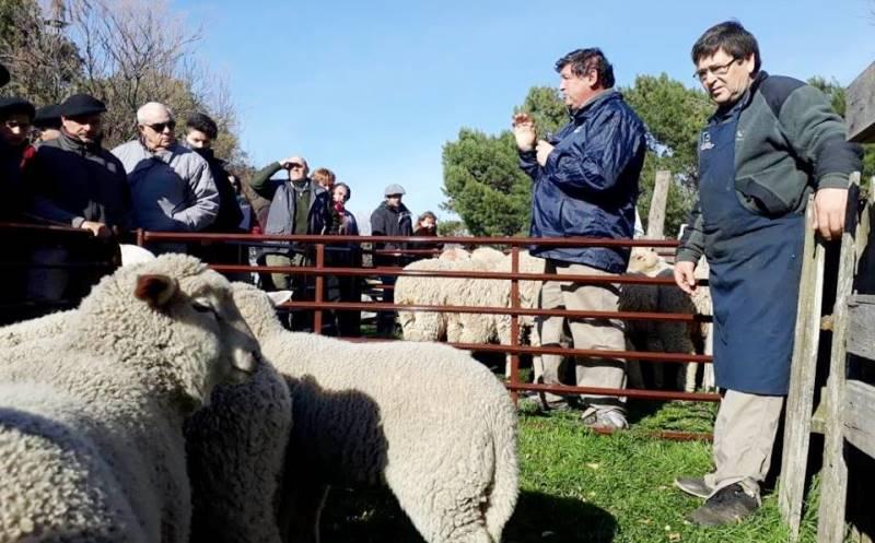 Esquila de ovejas