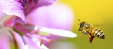 abejas y agroquímicos