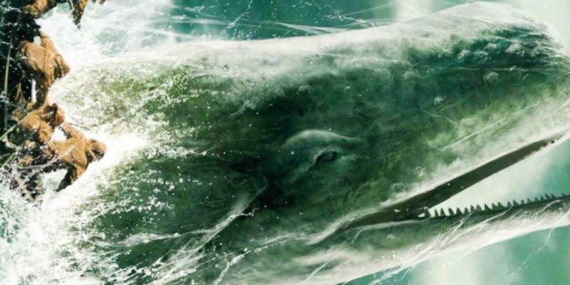 Descubren cachalote gigantesco